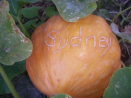 Sydney's pumkin