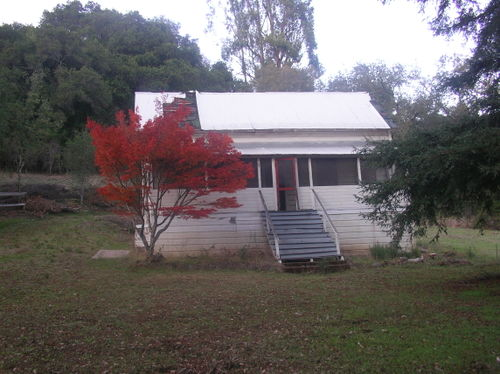 Abandoned house red tree