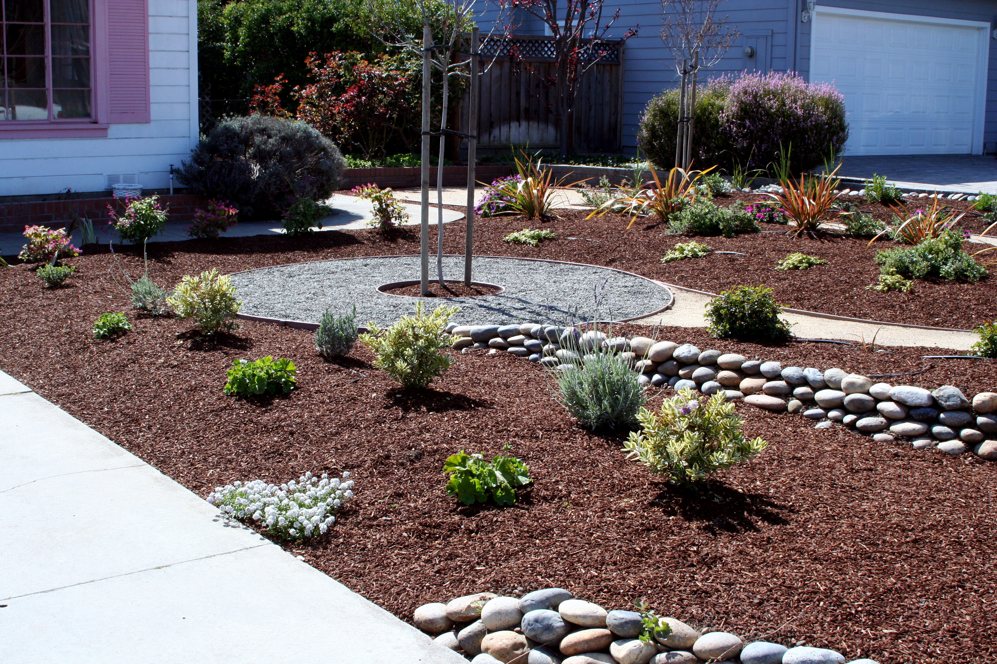 Drought resistant landscaping good momus yard finished for Drought resistant landscaping