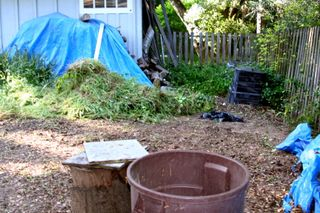 Backyard clean-up 1