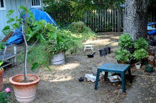 Backyard clean-up 3