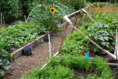 LAF veggie garden