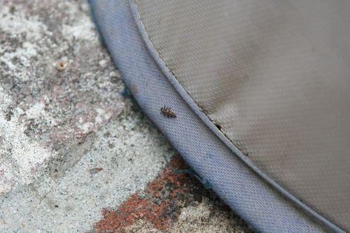 Ladybug nursery 5
