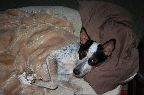 Moondoggie undercover