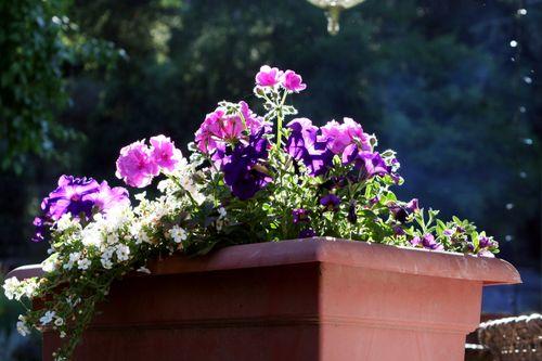 Purple planter