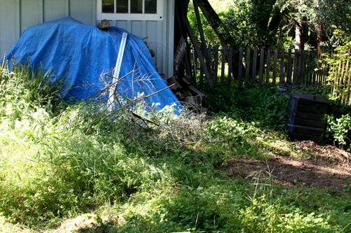 Backyard clean-up