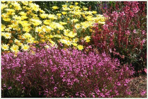 Jen's garden 9