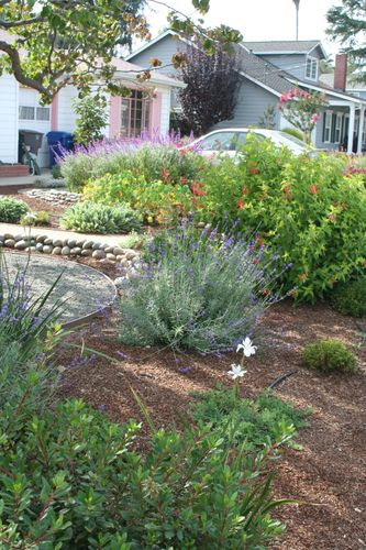 Drought tolerant update 5