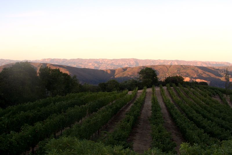 Nicki's vineyard