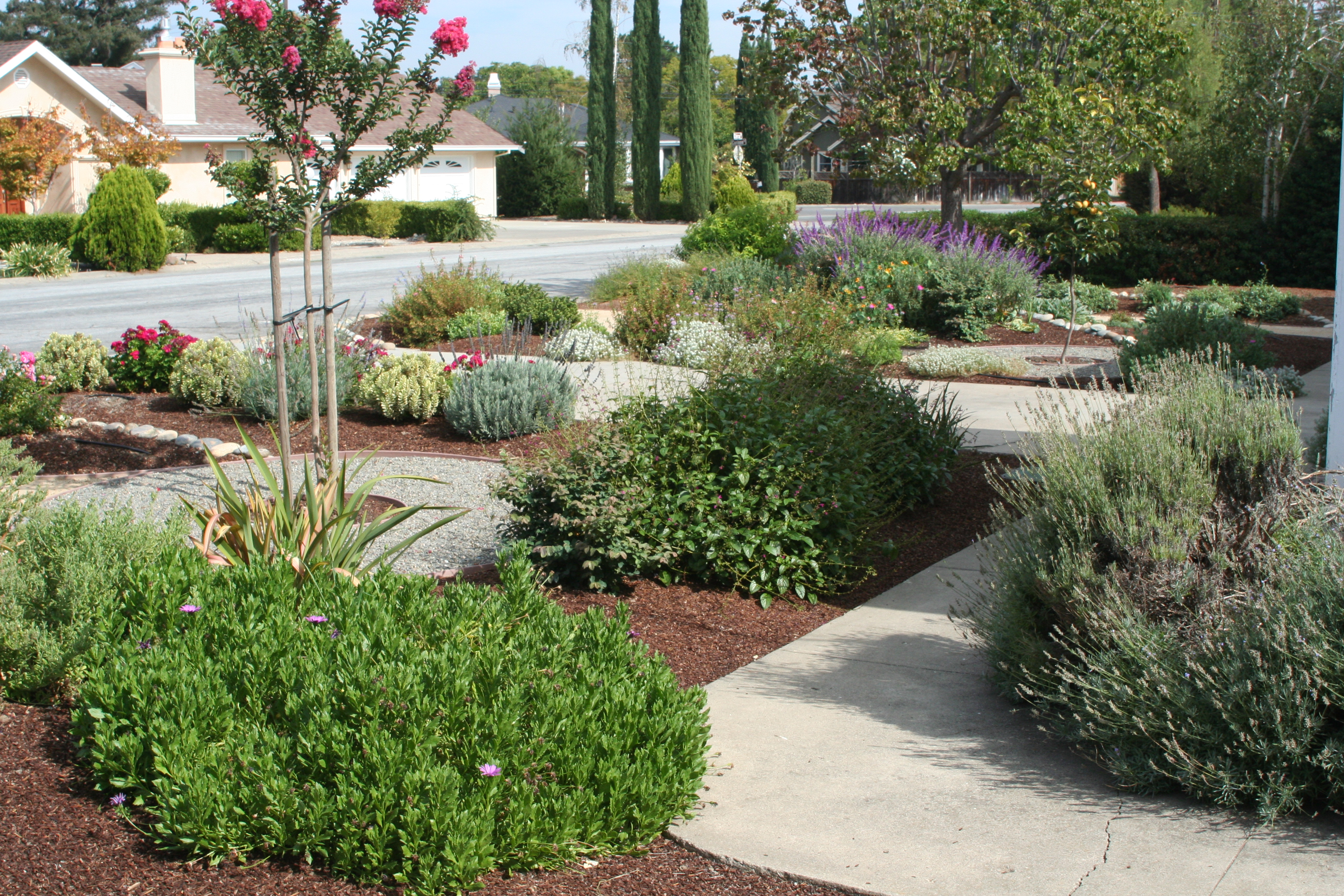 the gardeners anonymous blog drought tolerant landscape
