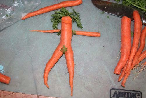 Nude carrot 5