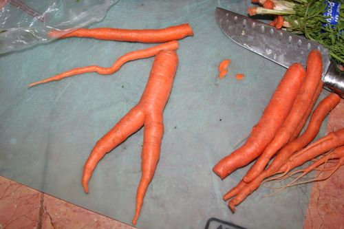Nude carrot 1