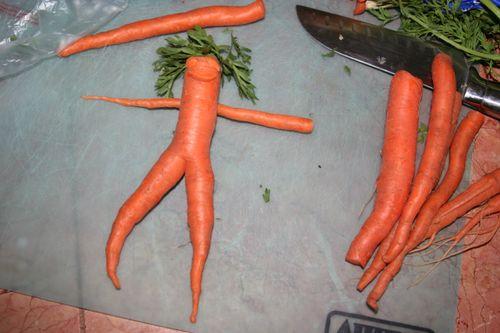 Nude carrot 4