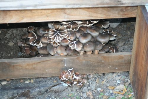 Wild mushrooms 1