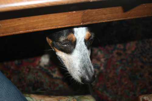 Rat chaser under table