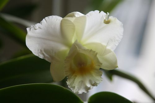 Orchid 8:11:10