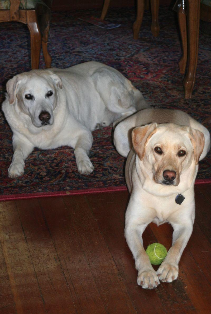 Sammy and Gemma