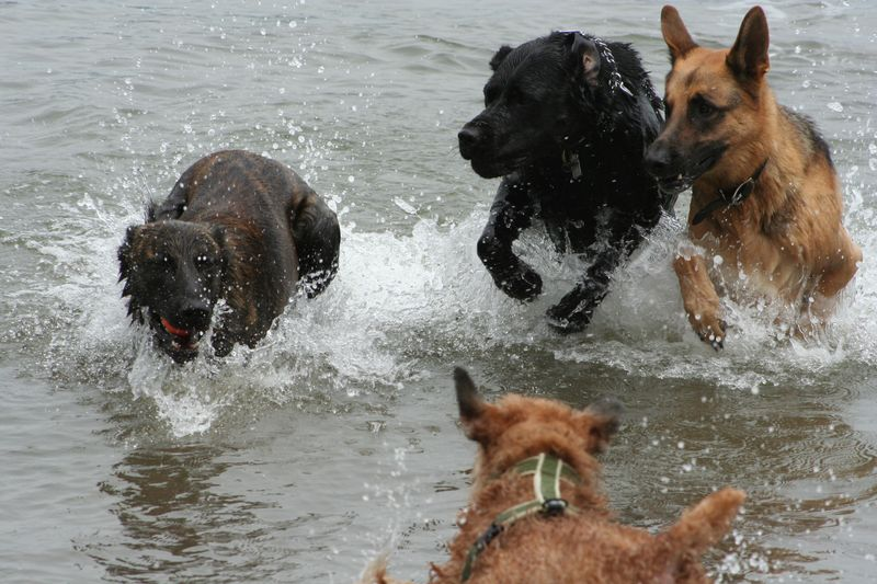 Dogs running out of water
