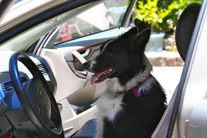 Daisy driving 1