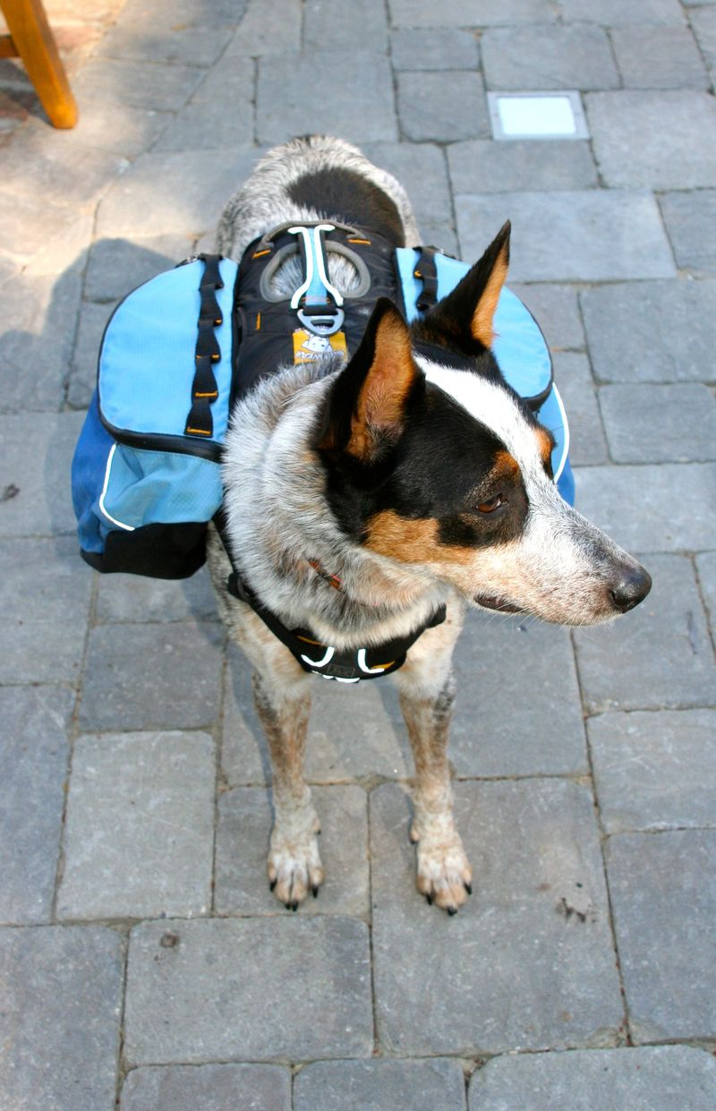 Moondoggie pack
