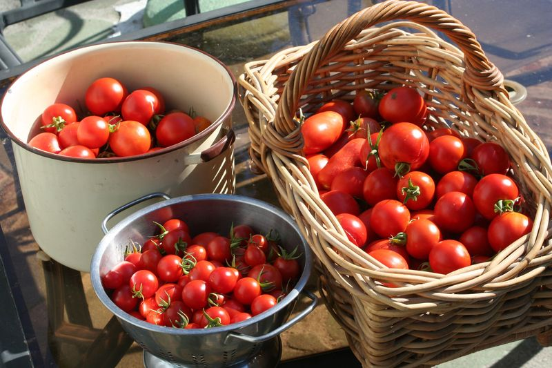 The end of tomatoes