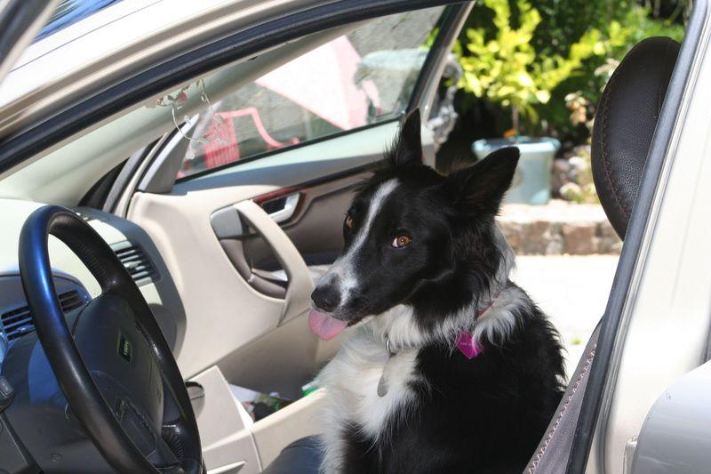 Daisy driving