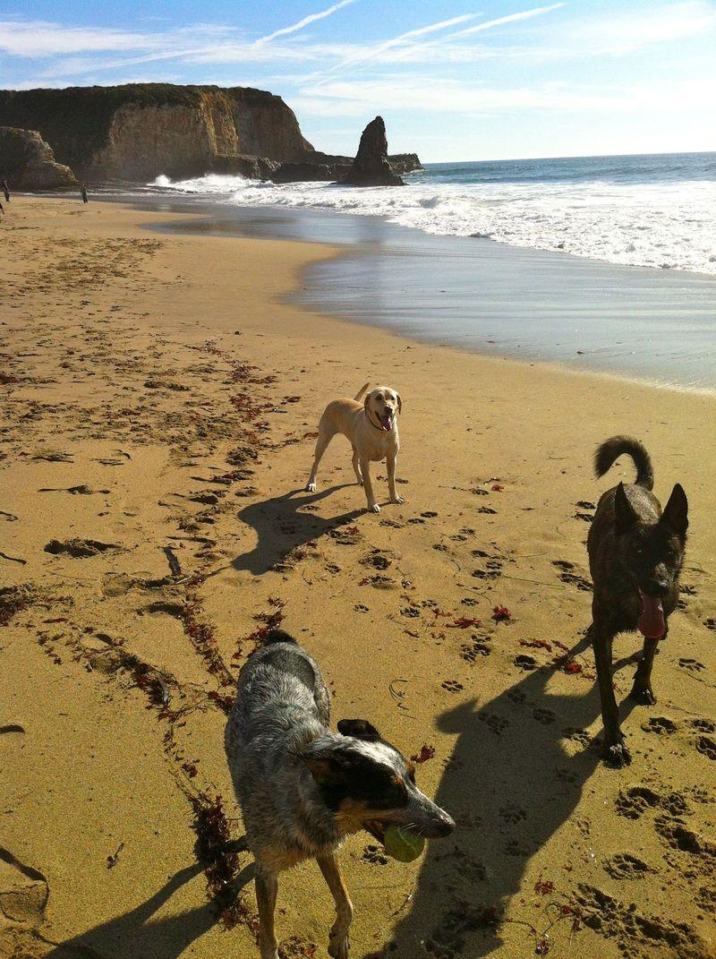 Beach w:dogs