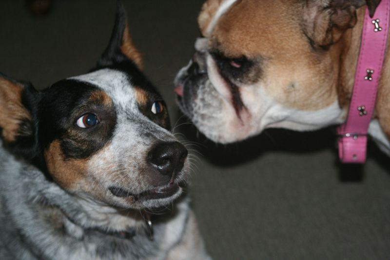 Betty and moondoggie