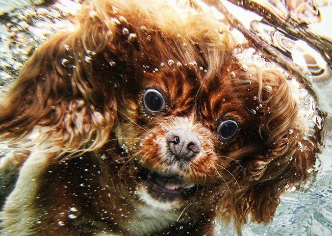 Underwater dog 1