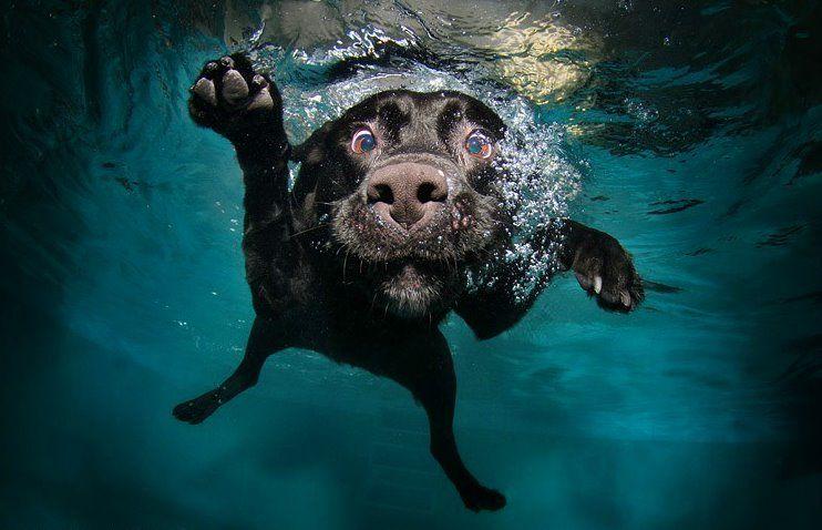 Underwater dog2