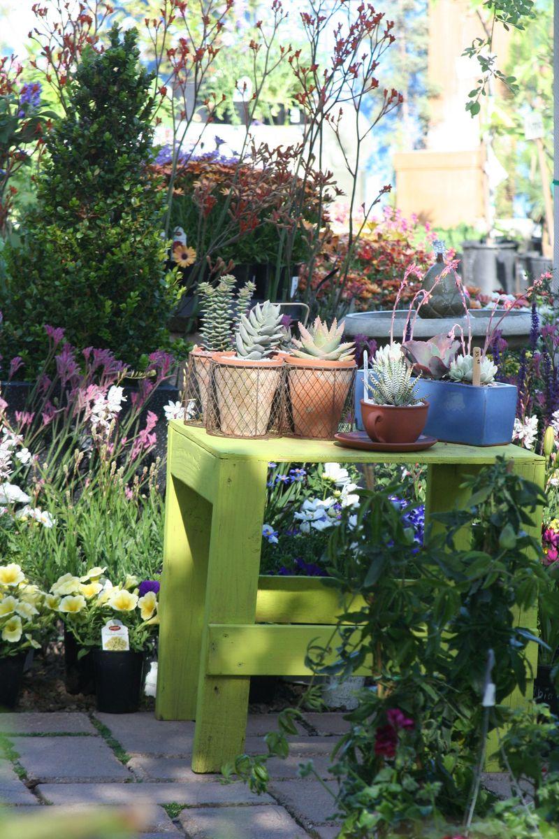 Cedros gardens1