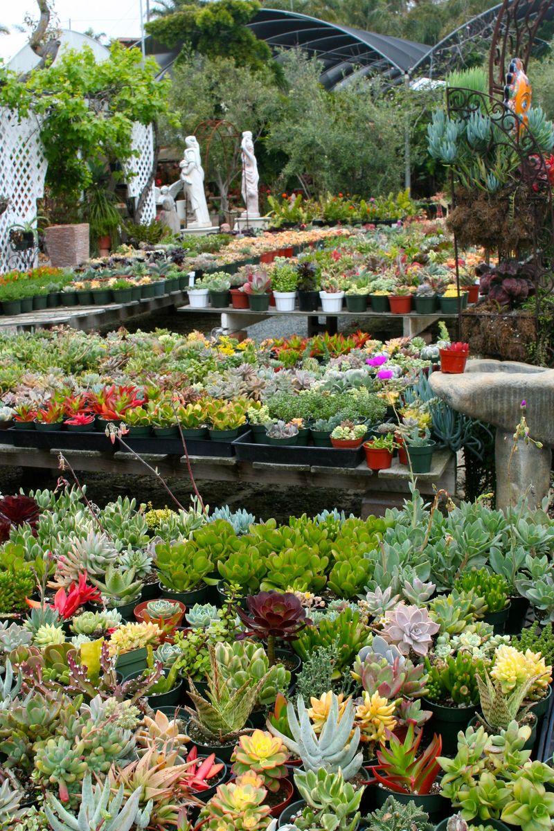 Cordova gardens3