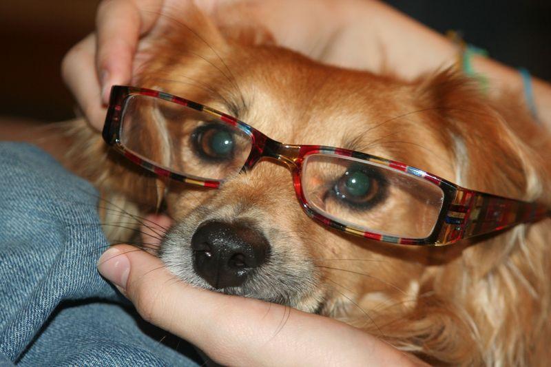 Puppy Mozart