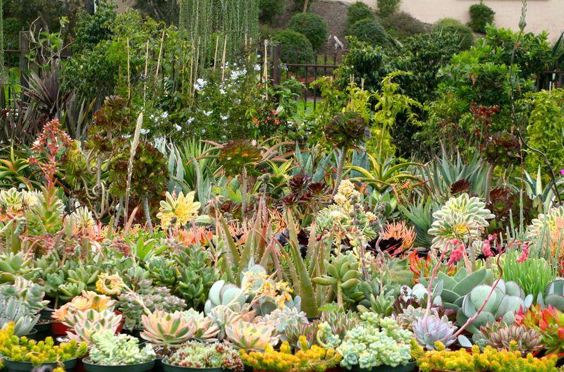 Cordova gardens