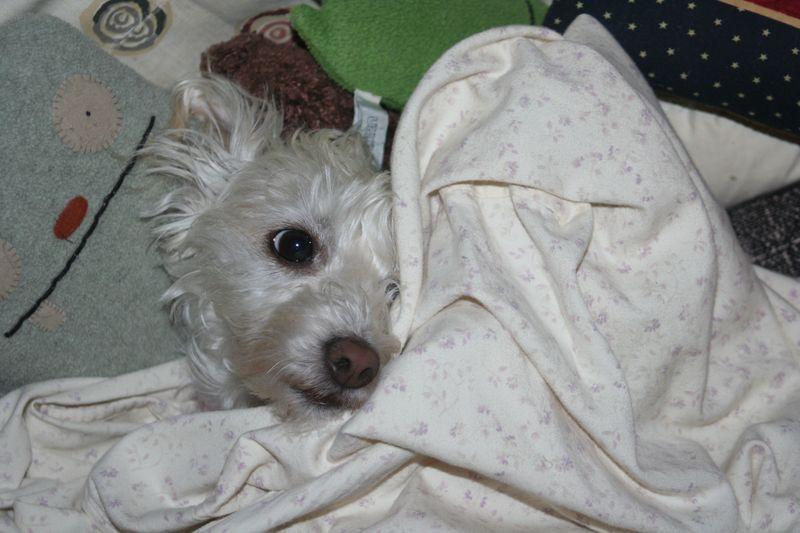 Puppy Chloe 2