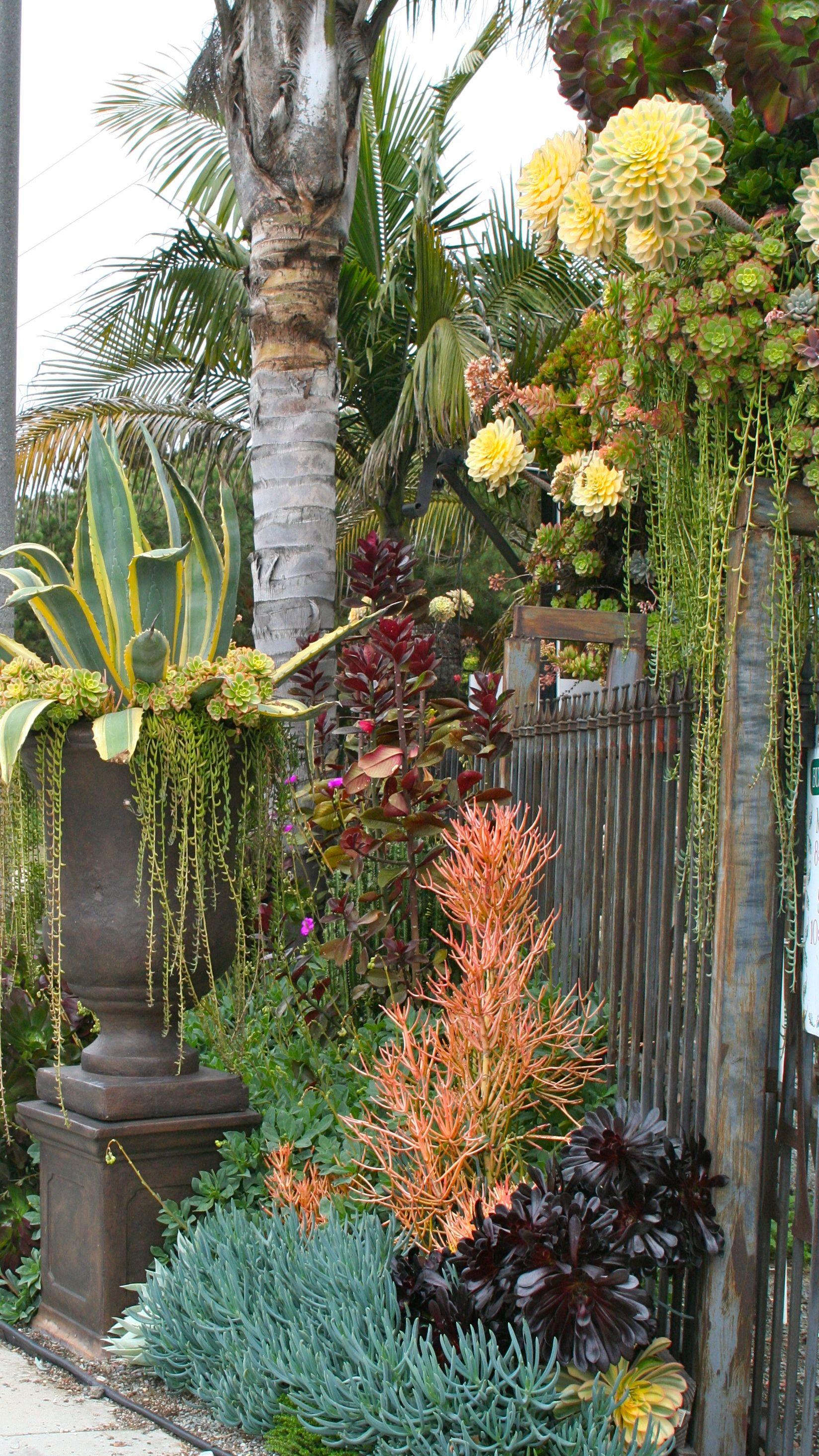 The Gardeners Anonymous Blog: Cordova Gardens—Better Than a Martini