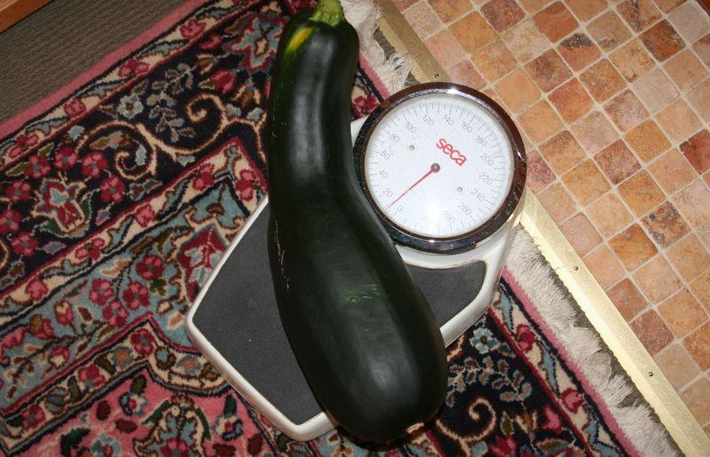 Zucchini scale
