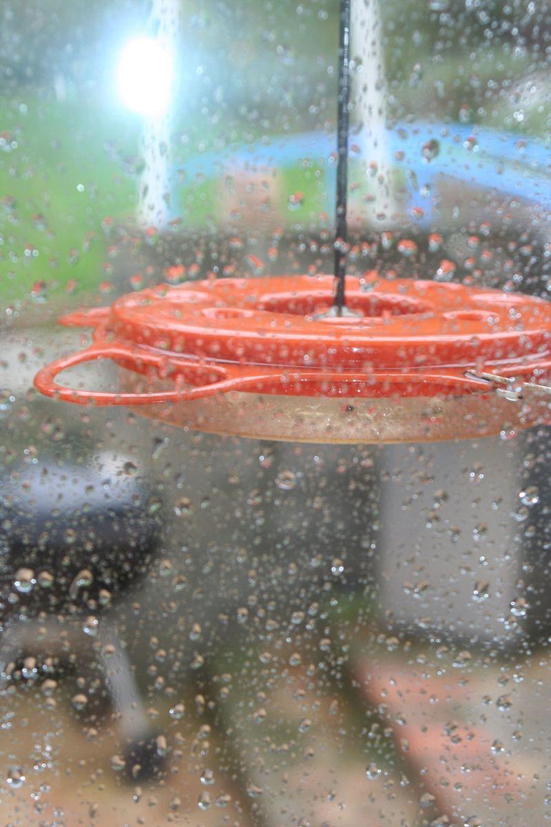 Wet bird feeder