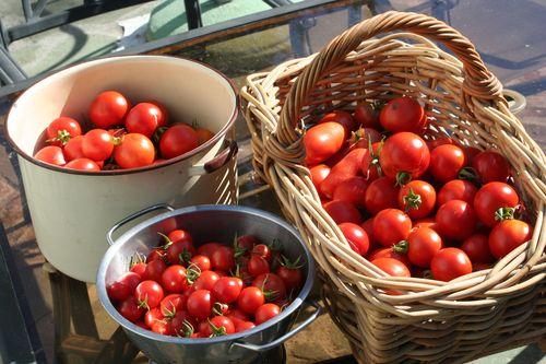 Tomatoes left