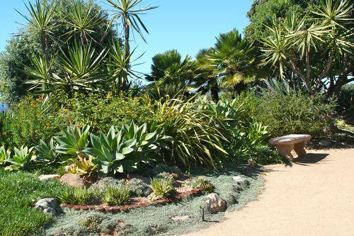 Swami's succulents