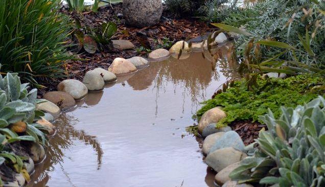 Flooded garden_12
