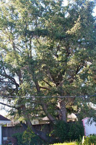Tree hater 4
