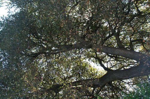 Tree hater 5