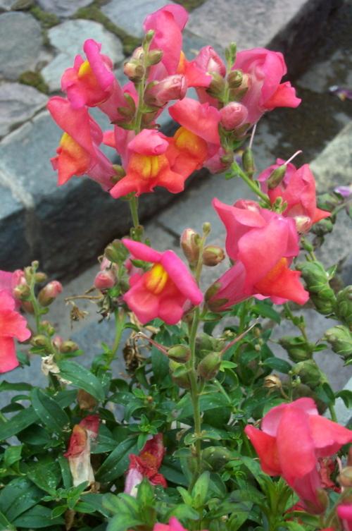 Cuzco_gardens_12