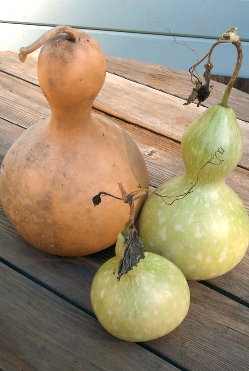 Gourd_old_and_new