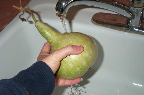 Gourd_washing