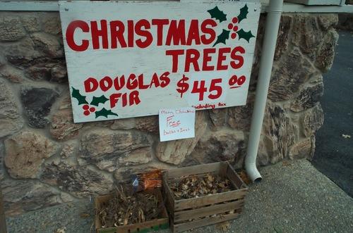 Christmas_tree_farm_1_2