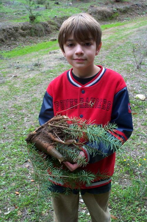 Christmas_tree_farm_dash_trunk