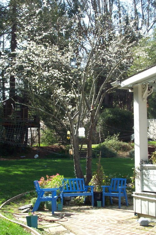 Blue_chairs_blooming_tree_2