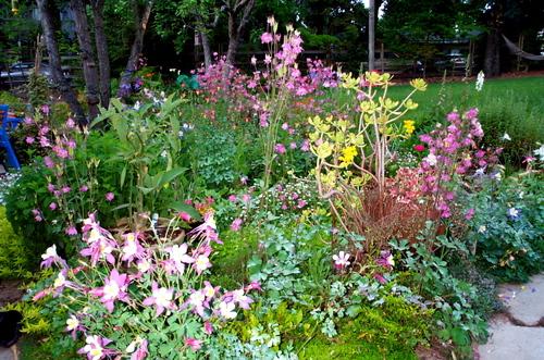 Gbbd_may_08_columbine_garden